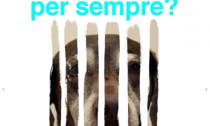 """""""Abbandonare un animale domestico significa condannarlo a morte"""""""