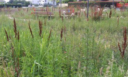 A Brugazzo erba alta un metro: il parco giochi è off limits