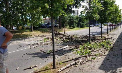 Tragedia sfiorata: alberi morti, parte l'abbattimento