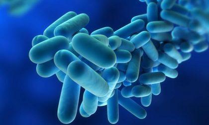 Legionella, sale a 33 il numero dei contagi