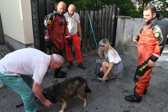 Cagnolina scappa per il maltempo, ritrovata dopo cinque giorni FOTO VIDEO