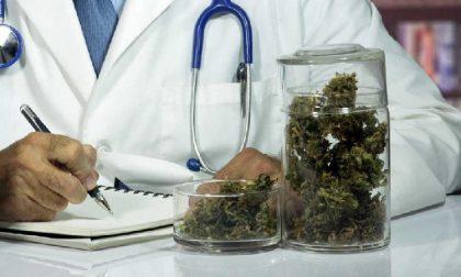 Cannabis terapeutica, cure gratuite in Lombardia