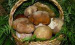Funghi che passione, ma attenti alle intossicazioni