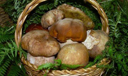 Funghi sospetti al mercato, ambulante multato