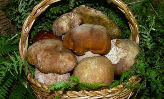 Controllo dei funghi in Ats Brianza: tutto quello che c'è da sapere