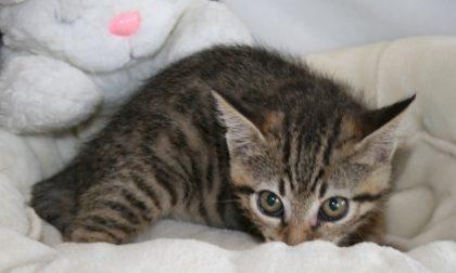 Giornata di festa per i gatti: INVIATECI le foto dei vostri amati mici