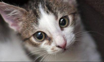 """Gatti randagi a Seregno: """"Ok alimentarli, ma nel rispetto delle regole"""""""