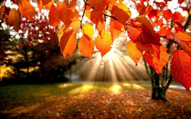 Equinozio d&#8217&#x3B;autunno oggi 21 settembre? No, è domenica 23