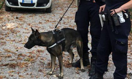 Renate assolda il celebre cane antidroga Narco