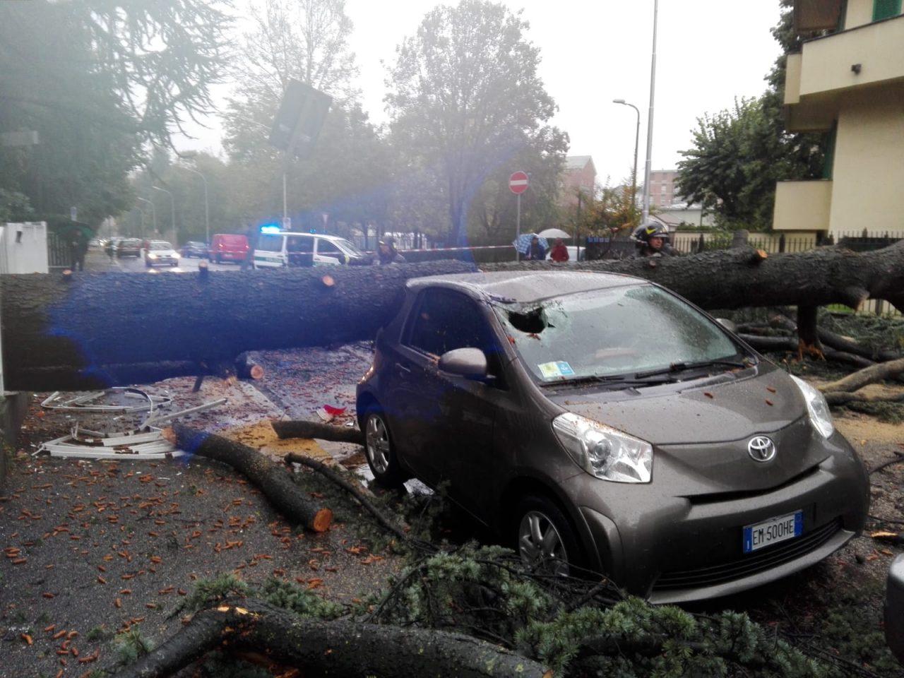 Paura a Triante, albero crollato in strada FOTO