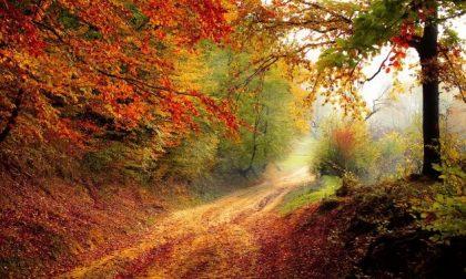I colori dell'autunno: cos'è e dove trovare la magia del foliage