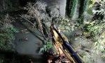 Recuperati dal Molgora due alberi caduti VIDEO