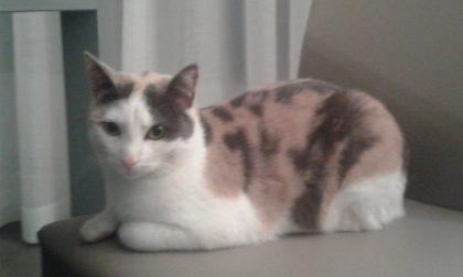 La gatta Shiva è tornata a casa grazie ai social