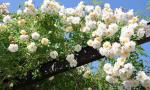 Arriva il freddo: ecco il decalogo di Coldiretti per salvare piante e fiori sul balcone