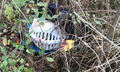 Una macabra scoperta a due passi dal canile di Monza