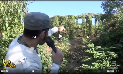 Bracconaggio: roccolo a Besana nel mirino di Striscia la Notizia FOTO