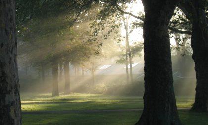 Tempo stabile nei prossimi giorni ma anche tanta nebbia PREVISIONI METEO