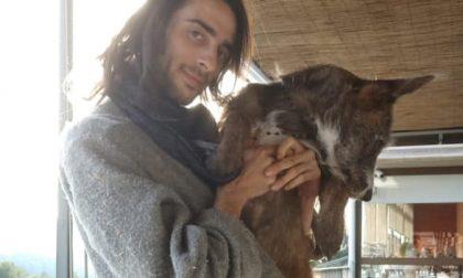 Scomparso col suo cane, è stato avvistato a Legnano