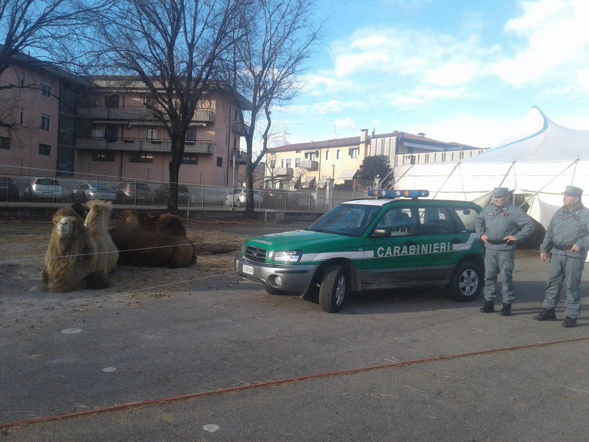 Animali del circo tenuti al gelo: intervengono i Carabinieri