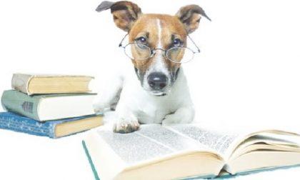 """Proprietari di cani a lezione per prendere il """"patentino"""""""