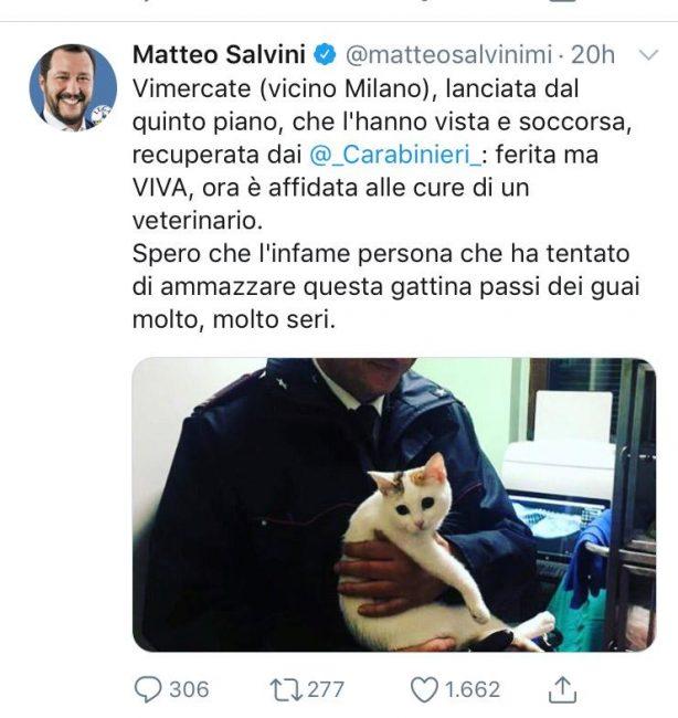 Gatta lanciata dal quinto piano, lo sdegno di Salvini