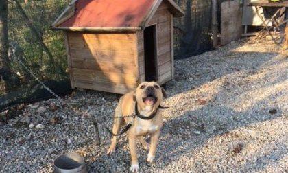 Cane tenuto alla catena e nel degrado nel campo rom, liberato da Enpa