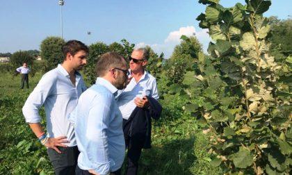 La Brianza e la Lombardia scommettono… sulle nocciole