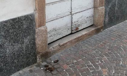 Deiezioni canine anche davanti alla porta d'ingresso