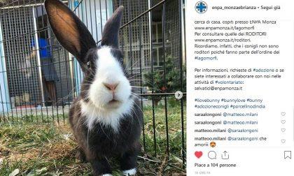 Enpa Monza, emergenza conigli e roditori L'APPELLO