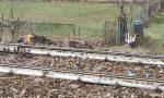 Cervo investito dal treno sulla Tirano-Milano: ritardi e possibili cancellazioni