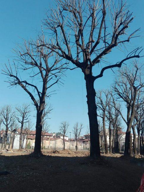 alberi parco urbano giussano
