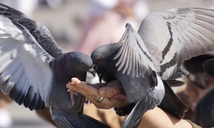 80enne finisce nel fosso mentre addestra i piccioni