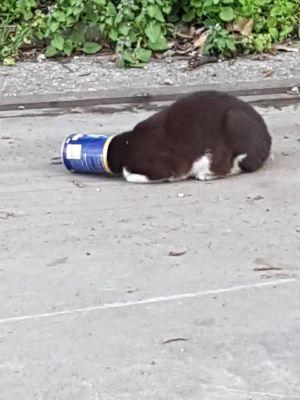 Gatto incastrato  in un barattolo di salsa,  salvato dai vigili
