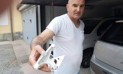 Intervento di BrianzAcque contro gli scarafaggi a Cesano