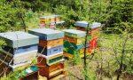 L'alveare in Tribunale… per fortuna senza api