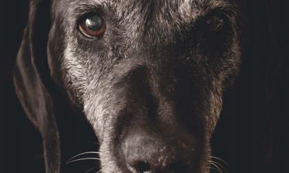 Abbandono degli animali: parte la campagna di sensibilizzazione Enpa