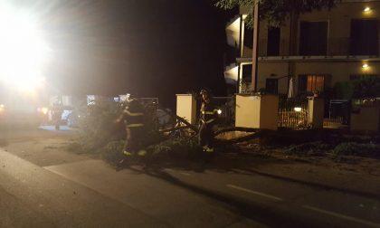 Cade una pianta in via Milano a Meda, arrivano i pompieri