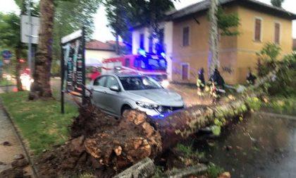 Temporale e grandine, albero cade su un'auto