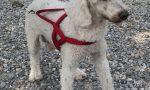 Con l'Enpa alla scoperta dei cani attraverso le caratteristiche di razza FOTO