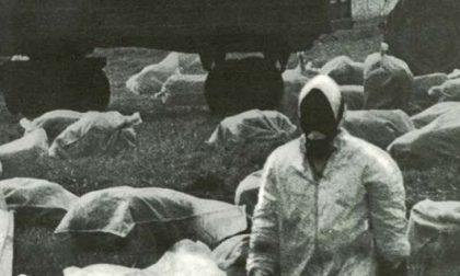 Seveso 45 anni dopo, rinviata la visita al Bosco delle Querce. Oggi secondo appuntamento online