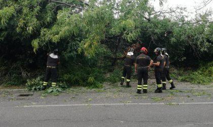 Crolla un albero e sfiora l'auto di un finanziere FOTO
