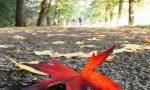 Reggia di Monza, lunedì riparte il photo contest dedicato al foliage