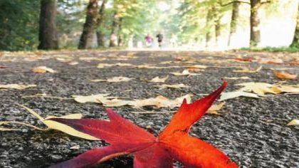 La Reggia di Monza lancia il suo primo Instagram photo contest sull'autunno