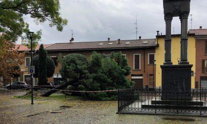 Maltempo cade un albero in piazza a Varedo