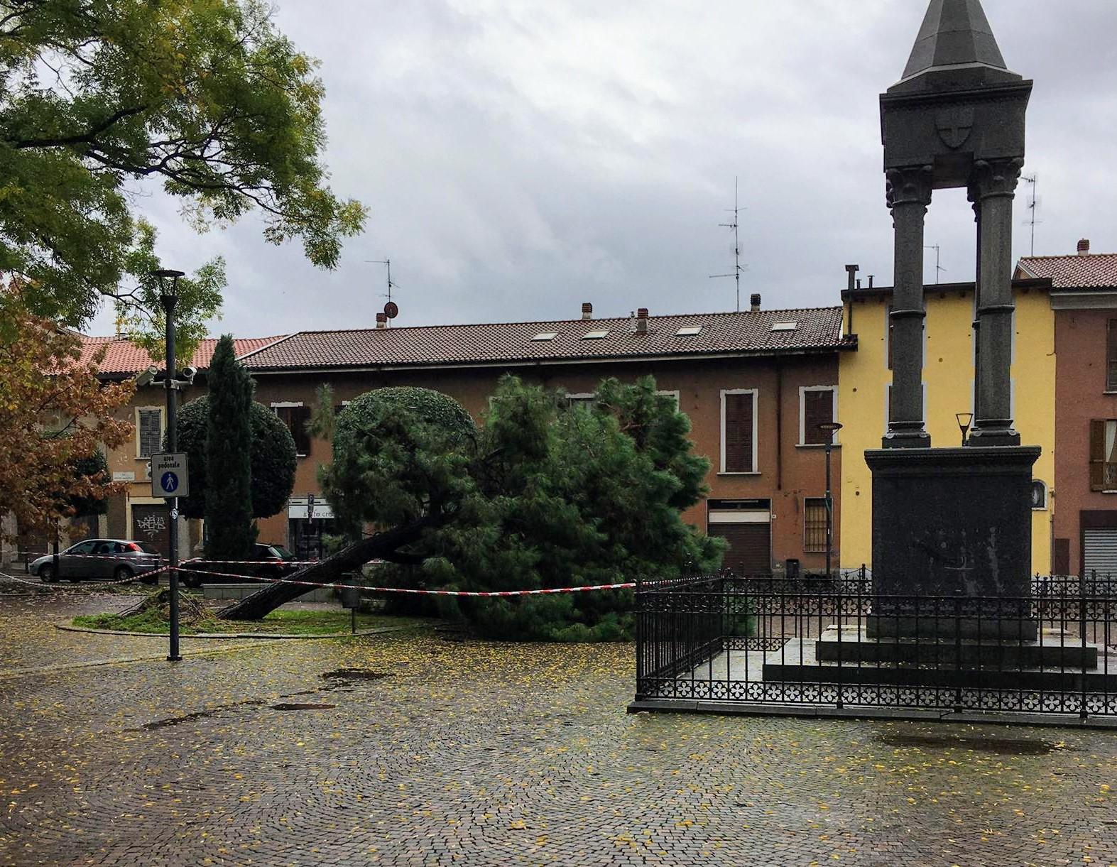 Maltempo cade un albero in piazza a Varedo - Giornale di Monza