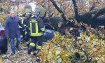 Maltempo in Brianza: albero sradicato a Mezzago distrugge una macchina FOTO