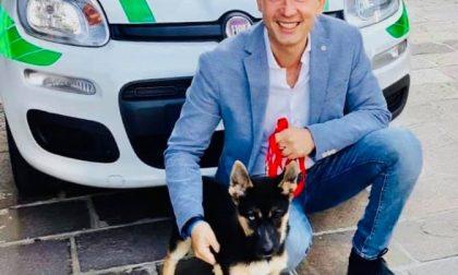 """Ecco """"Dea"""", il futuro cane antidroga della Polizia Locale"""