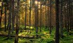 Giornata dell'albero: il Pd per una Lombardia più verde