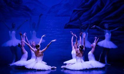 Al Teatro Manzoni di Monza arriva Il Lago dei Cigni