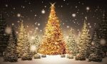 Bernareggio regala una seconda vita agli alberi di Natale